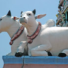 Picture - Sacred cow carvings on the Sri Mariamman Hindu temple in Singapore.