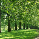 Picture - The green of summer in St James Park in London.