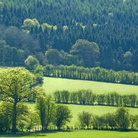 Picture - Green field and trees at Stokesay.