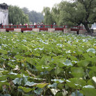 Picture - Lily pond at the Summer Palace in Beijing.