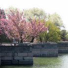 Picture - Springtime trees and waterway in the Summer Palace.