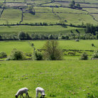 Picture - Swaledale in the Yorkshire Dales National Park.
