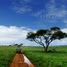 Picture - Jppe on safari in Tarangire National Park.