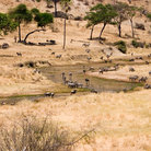 Picture - Wildlife around the Tarangire river in Tanzania.