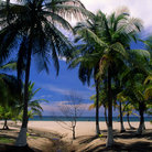 Picture - Palm trees behind a beach in Tela.