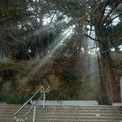 Picture - Sunbeams through the trees, Telegraph Hill, San Francisco.
