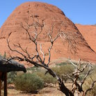 Picture - Close up at the Olgas.