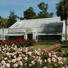 Picture - Rose Garden in May at Bellingrath Gardens in Theodore, AL.