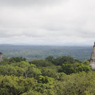 Picture - View over the jungle at Tikal.