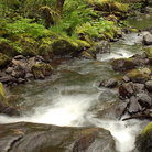 Picture - Elliot Creek in Tillamook State Forest, Oregon.