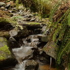 Picture - Creek flows through Tillamook Forest.