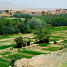 Picture - Fields at the oasis town of Tinerhir.