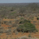 Picture - Landscape of Tsavo West National Park.