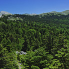 Picture - Summer view of mountains and pines, Uludag.