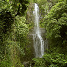Picture - The spectacular Umauma falls at the World Botanical Gardens near Hilo.