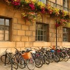 Picture - Bicycles lined up at Cambridge University.