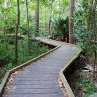 Picture - Boardwalk in the Botanical Garde, University of South Florida in Tampa.