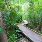 Picture - Fern path, University of South Florida, Tampa.
