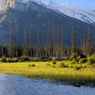 Picture - Mount Rundle seen from Vermillion Lakes.
