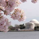 Picture - Jefferson Memorial across water, Washington.
