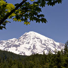 Picture - Longmire, Mount Rainier National Park.