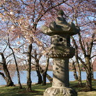 Picture - Japanese Pagoda near the Tidal Basin in Washington.