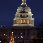 Picture - Christmas tree at the US Capitol building in Washington.