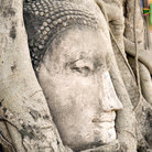 Picture - Buddha head covered in tree roots at the temple of Wat Mahathat in Ayutthaya.