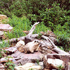 Picture - A marmot sits on a rock in Waterton Lakes National Park.