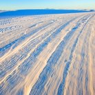 Picture - Tracks in the sand at White Sands National Monument.