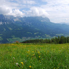 Picture - Meadow in the Wilder Kaiser Mountains.