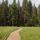 Picture - Boardwalk leading through a meadow, Yosemite.