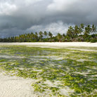 Picture - A beach on the east coast of Zanzibar.