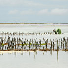 Picture - A seaweed farm on the east coast of Zanzibar.