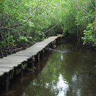 Picture - Boardwalk at Jozani Forest, Zanzibar.