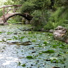Picture - Water lilies in the pond at the Zilker Botanical Gardens, Austin, Texas.