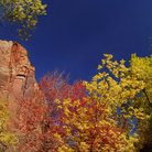 Picture - Colorful foliage in Zion National Park at Temple of Sinawawa, Utah.