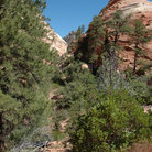 Picture - A canyon in Zion National Park.