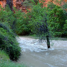 Picture - Virgin River roaring through Zion National Park.
