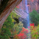 Picture - Fall colors in Zion National Park.