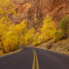 Picture - Autumn in Zion National Park.