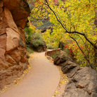 Picture - Riverside path in Zion National Park, Utah.