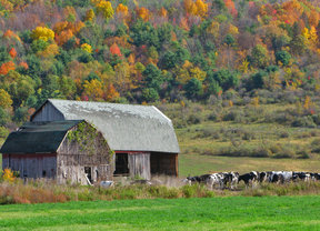 Picture - An old barn in the fall near Binghamton.