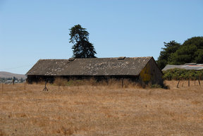 Picture - Barn near Petaluma.