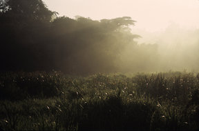 Picture - Dawn at the Saiwa Swamp.
