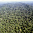Aerial view of the rainforest in Ecuador.
