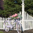 Antique bicycle with flowers against picket fence.