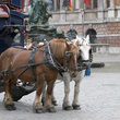 Tourist Transport in Antwerp.