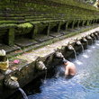 The Tirta Empul Temple in Bali.