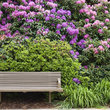 Bench surrounded by Rhododendrons in full bloom, North Carolina.